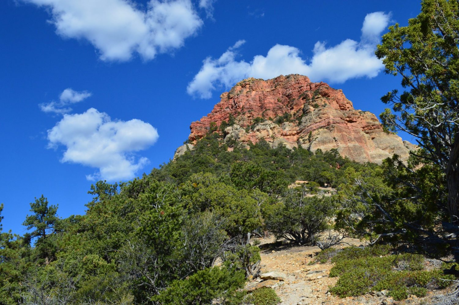 Wandelen: Vermillion Castle Trail in Dixie National Forest, VS