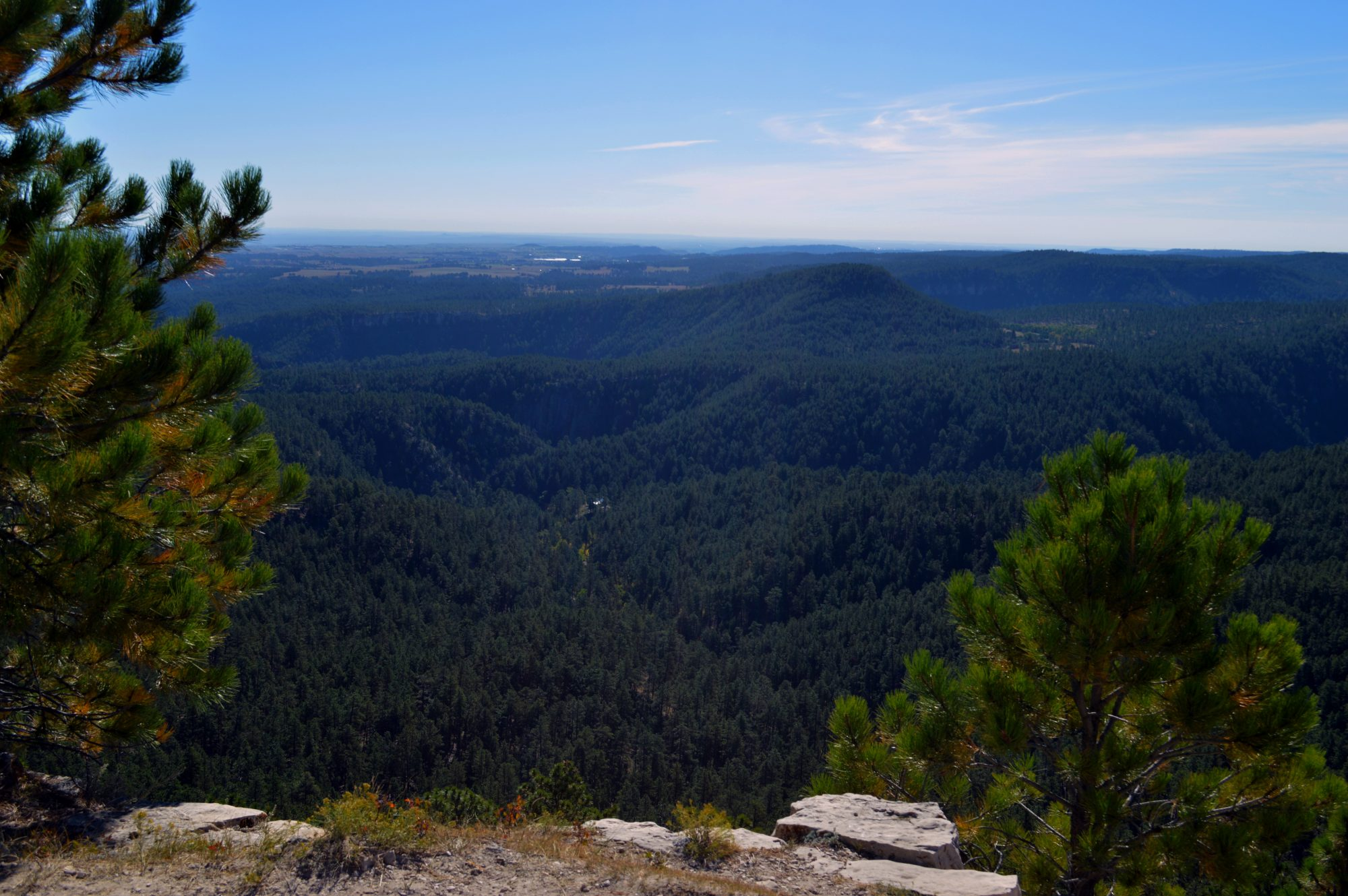 Wandelen: Buzzard Trail in Black Hills National Forest, VS