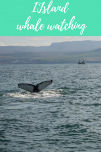 IJsland whale watching
