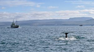 walvisspotten IJsland