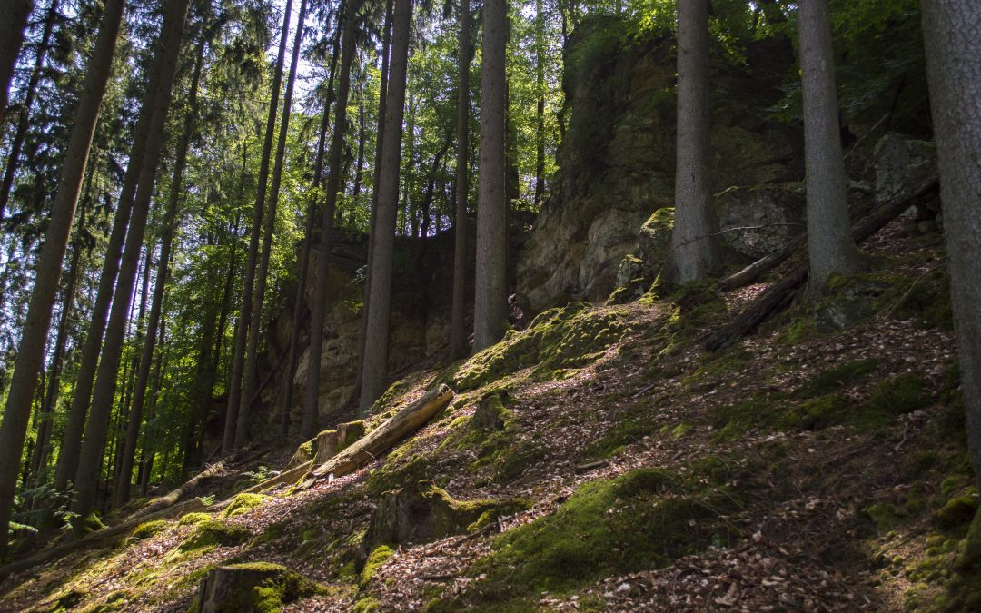 Hiking in Mullerthal, Luxembourg