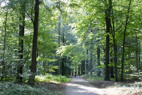 mooiste wandelingen Vlaanderen