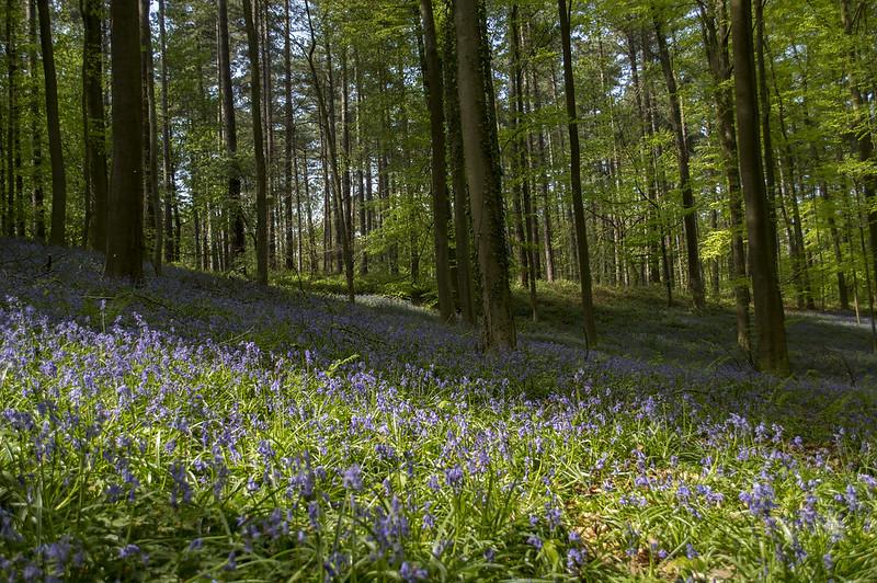 Mooiste wandelingen in Vlaanderen